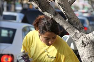 tree-planting3